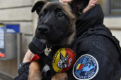 chiot police genève